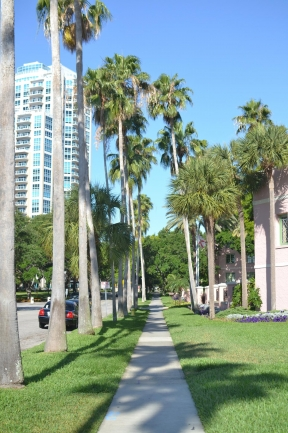 Palm trees line the walkways throughout St Petersburg Florida