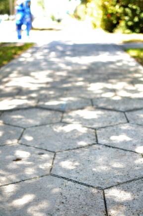 You can find St Pete\'s signature hex-block sidewalks through out the Old Northeast neighborhood