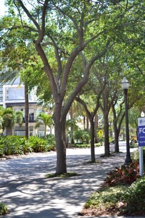 The streets in Downtown St Petersburg are lined with trees and lush foliage
